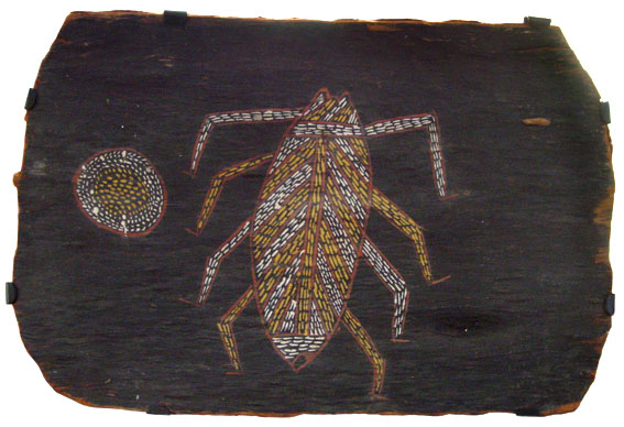 Groote Eylandt Spider